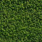 texture 314 green wall foliage 4500px